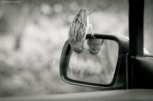 source: http://www.lovethispic.com/image/7306/peeking-bird
